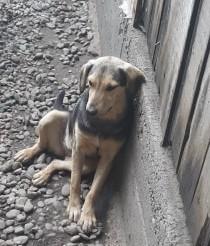 Hund adoptieren Rumänien Elfie
