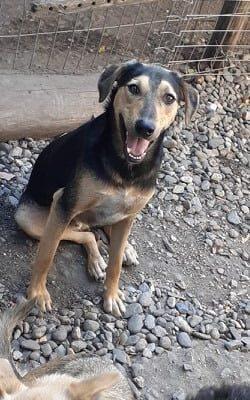 Hund adoptierne Rumänien Edwin