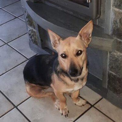 Hund adoptieren Rumänien Eileen