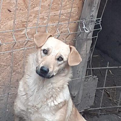 Hund adoptieren Rumänien Esmeralda