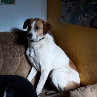 Hund adoptieren Rumänien Sancho