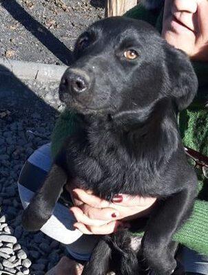 Hund adoptieren Rumänien Flavio
