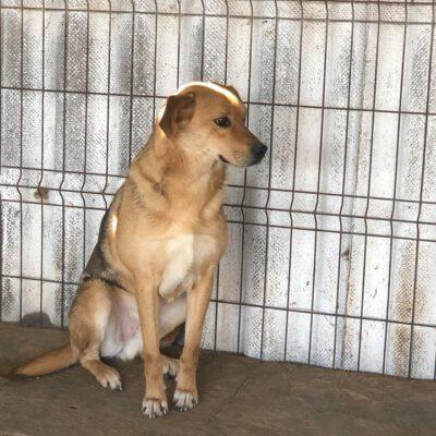 Hund adoptieren Rumänien Billy