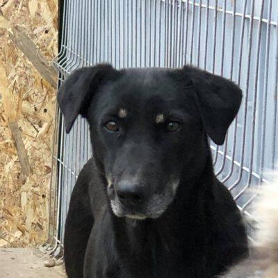 Hund adoptieren Rumänien Sheila