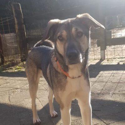Hund adoptieren Rumänien Barney