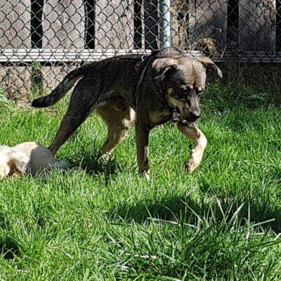 Hund adoptieren Rumänien Milo