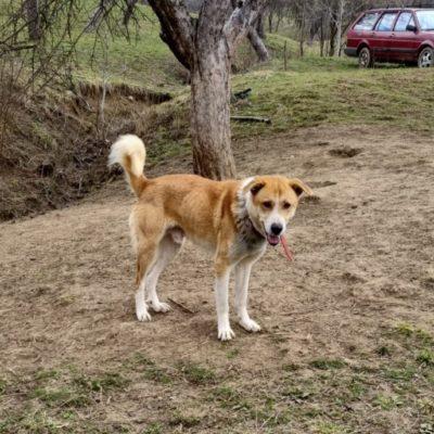 Hund adoptieren Rumänien Oka
