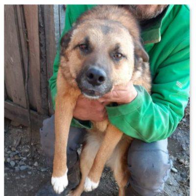 Hund adoptieren Rumänien Zara