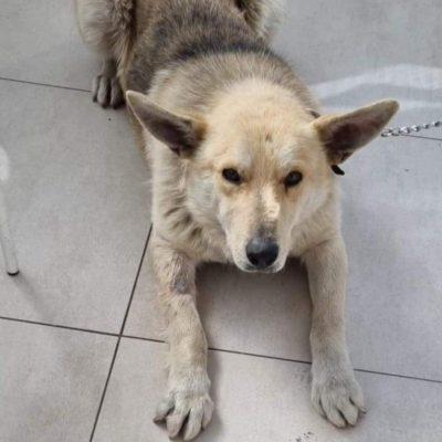 Hund adoptieren Rumänien Spencer