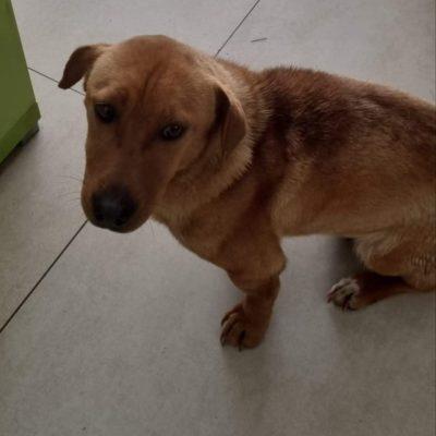 Hund adoptieren Rumänien Yona