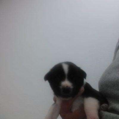 Hund adoptieren Rumänien Fine