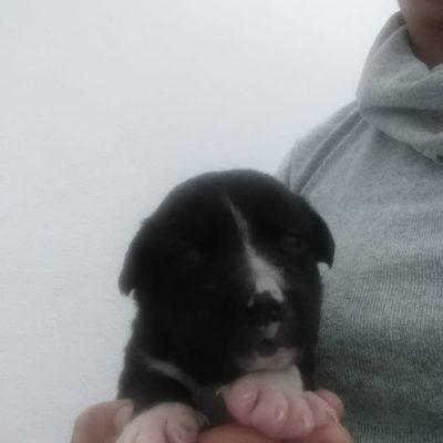 Hund adoptieren aus Rumänien Fae