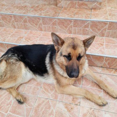 Hund adoptieren Rumänien Alma