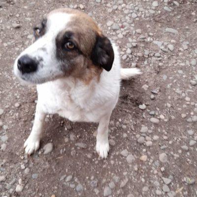 Hund aus Tierschutz Rumänien adoptieren Pearl