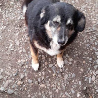 Hund aus Tierschutz Rumänien adoptieren Benita