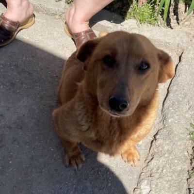 Hund aus Tierschutz Rumänien adoptieren Candy