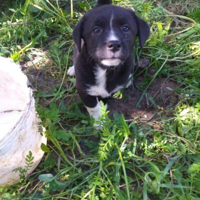 Hund aus Tierschutz Rumänien adoptieren Fae