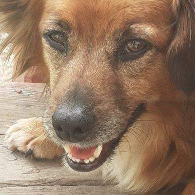 Hund aus Tierschutz Rumänien adoptieren Filou
