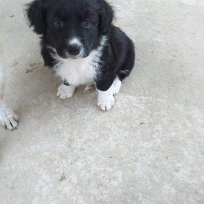 Hund aus Tierschutz Rumänien adoptieren Findus