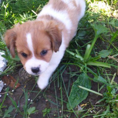Hund aus Tierschutz Rumänien adoptieren Fridolin