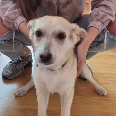 Hund aus Tierschutz Rumänien adoptieren Lana