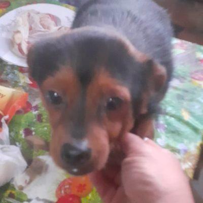 Hund aus Tierschutz Rumänien adoptieren Roy