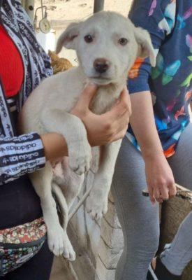 Hund aus Tierschutz adoptieren Welpe Rumänien Tanja