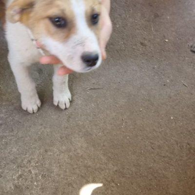 Hund aus Tierschutz Rumänien adoptieren Tara