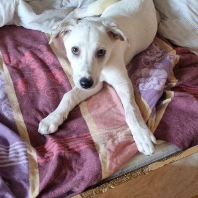 Hund aus Tierschutz Rumänien adoptieren Taylor