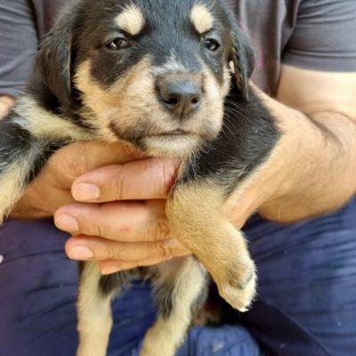 Hund aus Tierschutz Rumänien adoptieren Welpe Hanny