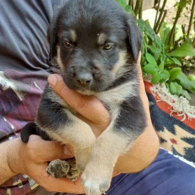 Hund aus Tierschutz Rumänien adoptieren Welpe Herby