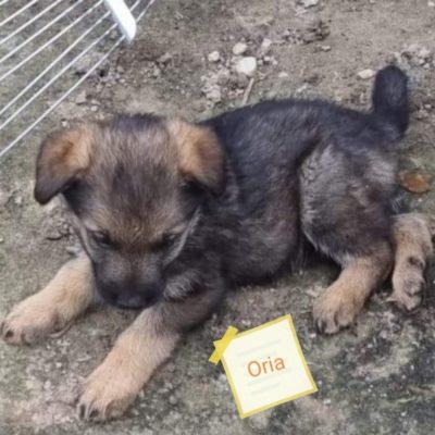 Hund aus Tierschutz Rumänien adoptieren Welpe Oria