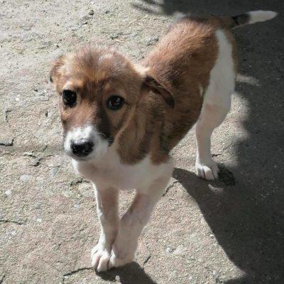 Hund aus Tierschutz Rumänien adoptieren Ayla