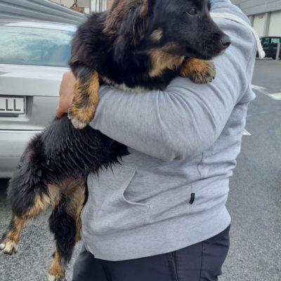 Hund aus Tierschutz Rumänien adoptieren Junghund Ronja