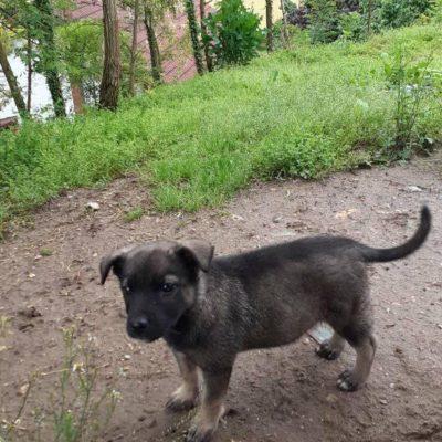 Hund aus Rumänien Welpe adoptieren Ziva