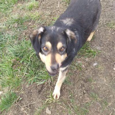 Hund aus Tierschutz Rumänien adoptieren Amica