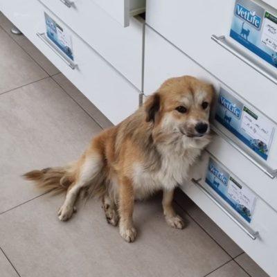 Hund aus Tierschutz Rumänien adoptieren Mico