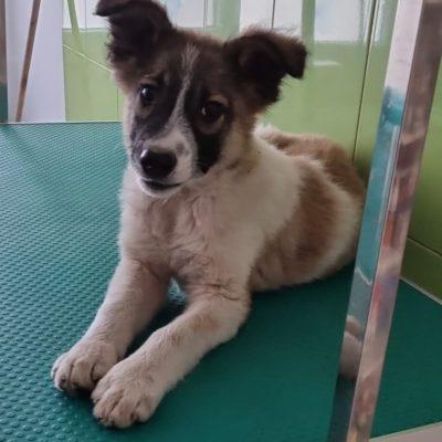 Hund aus Tierschutz Rumänien adoptieren Mogli