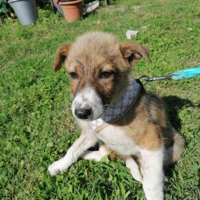 Hund aus Tierschutz Rumänien adoptieren Adina