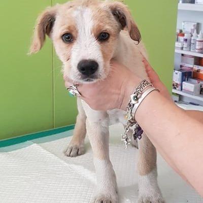 Hund aus Tierschutz Rumänien adoptieren Poldi
