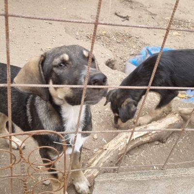 Hund aus Tierschutz Rumänien adoptieren Henry