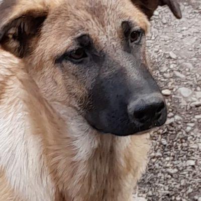 Hund aus Tierschutz Rumänien adoptieren Thali