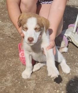 Hund aus Tierschutz Rumänien adoptieren Dakota