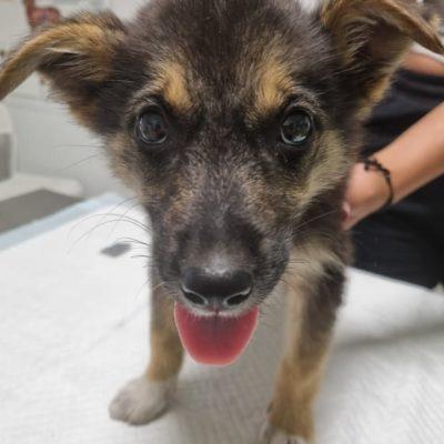 Hund aus Tierschutz Rumänien adoptieren Sarah