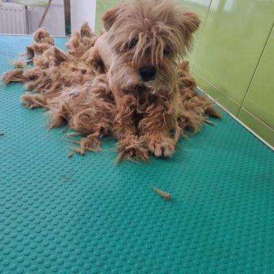 Hund aus Tierschutz Rumänien adoptieren Fibi