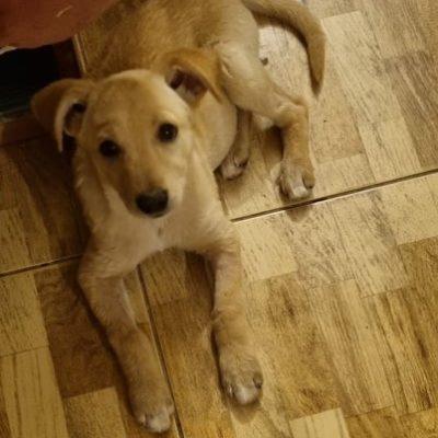 Hund aus Tierschutz Rumänien adoptieren Bijou