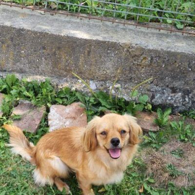 Hund aus Tierschutz Rumänien adoptieren Oana