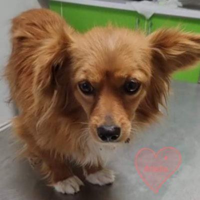 Hund aus Tierschutz Rumänien adoptieren Arielle