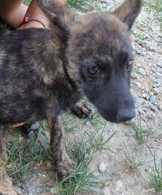Hund aus Tierschutz Rumänien adoptieren Venya