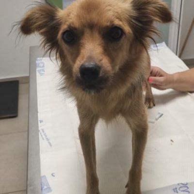 Hund aus Tierschutz Rumänien adoptieren Jenny